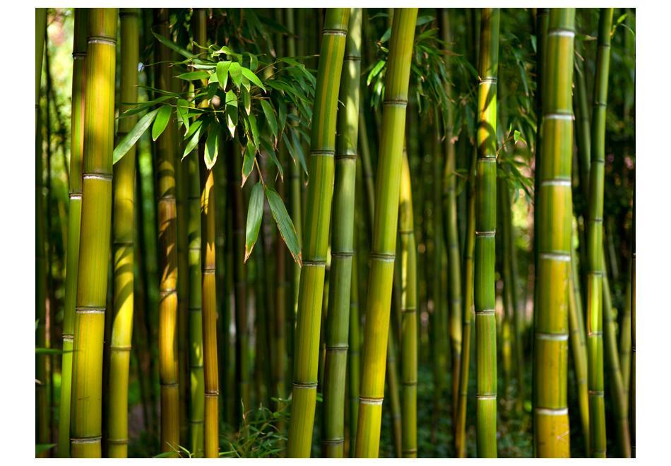 Útmutató a bambusz padlóburkolatokhoz a fürdőszobában